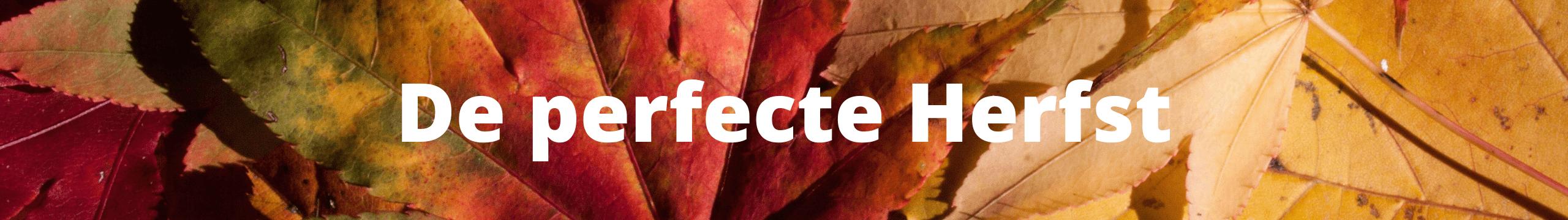 De Perfecte Herfst - divider herfstweken